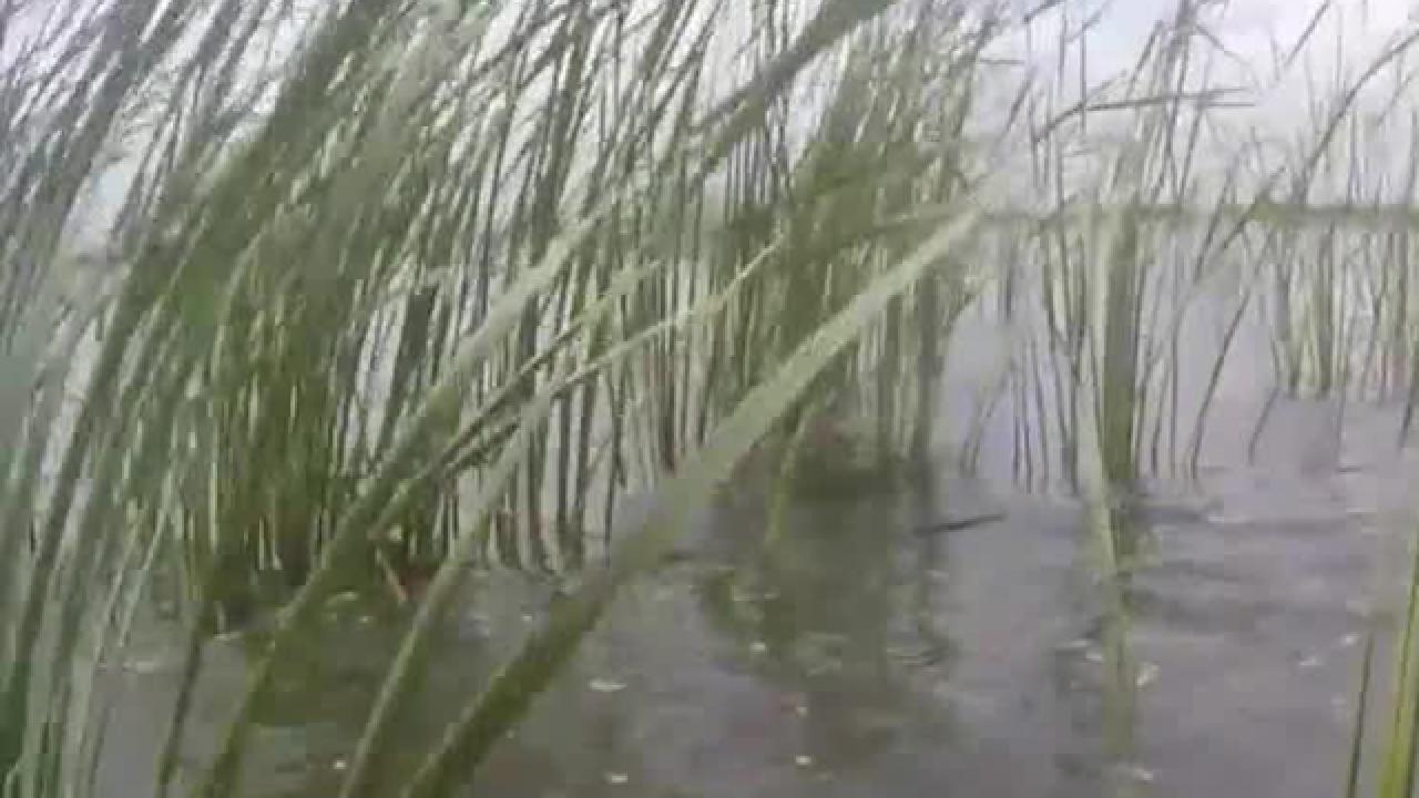 Higher lake levels could impact vegetation