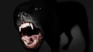 Dog_Growl_Dog_attack.jpg