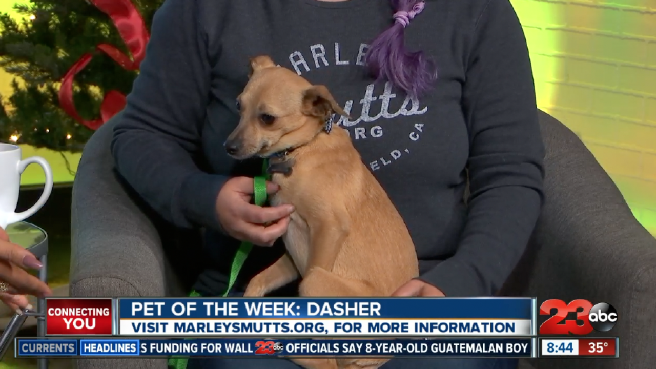 PET OF THE WEEK : DASHER