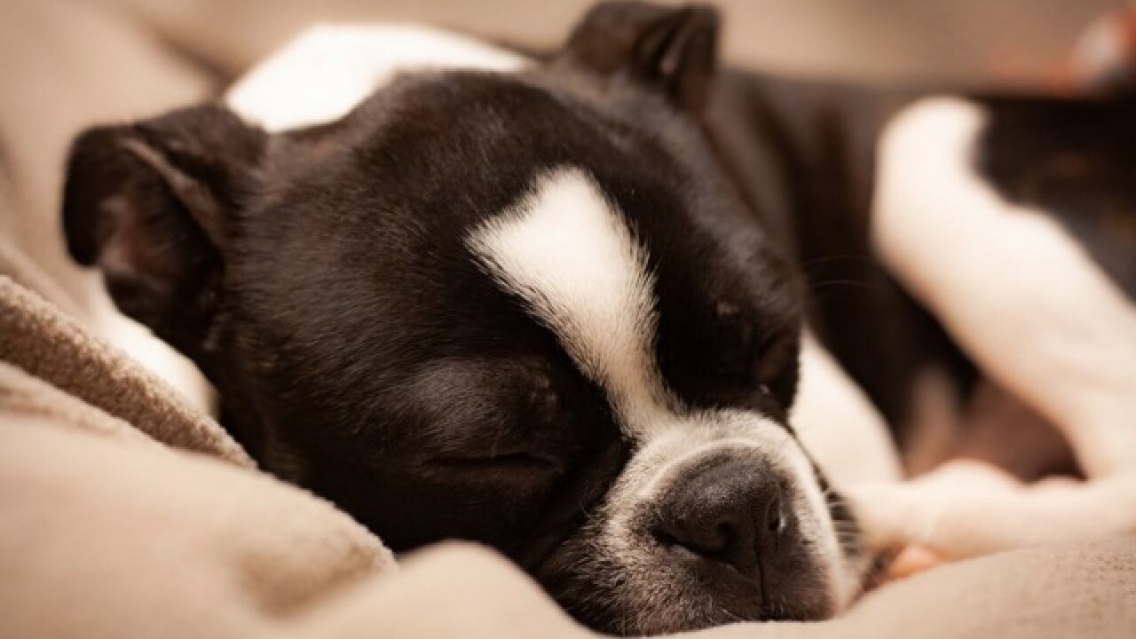 Women sleep better with dogs by their sides, study suggests