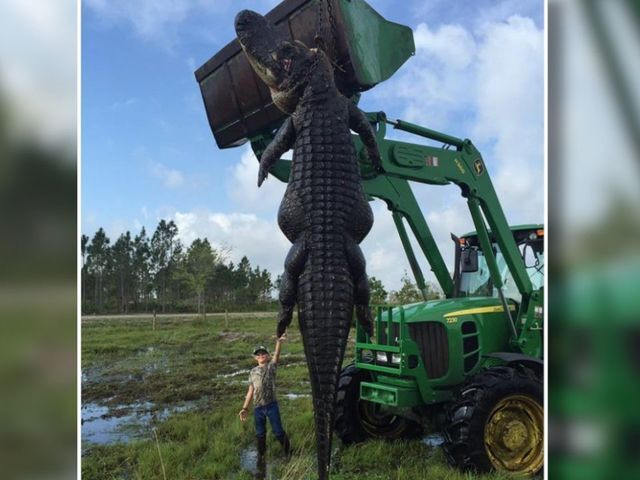 39 crazy gator photos from the last 2 years
