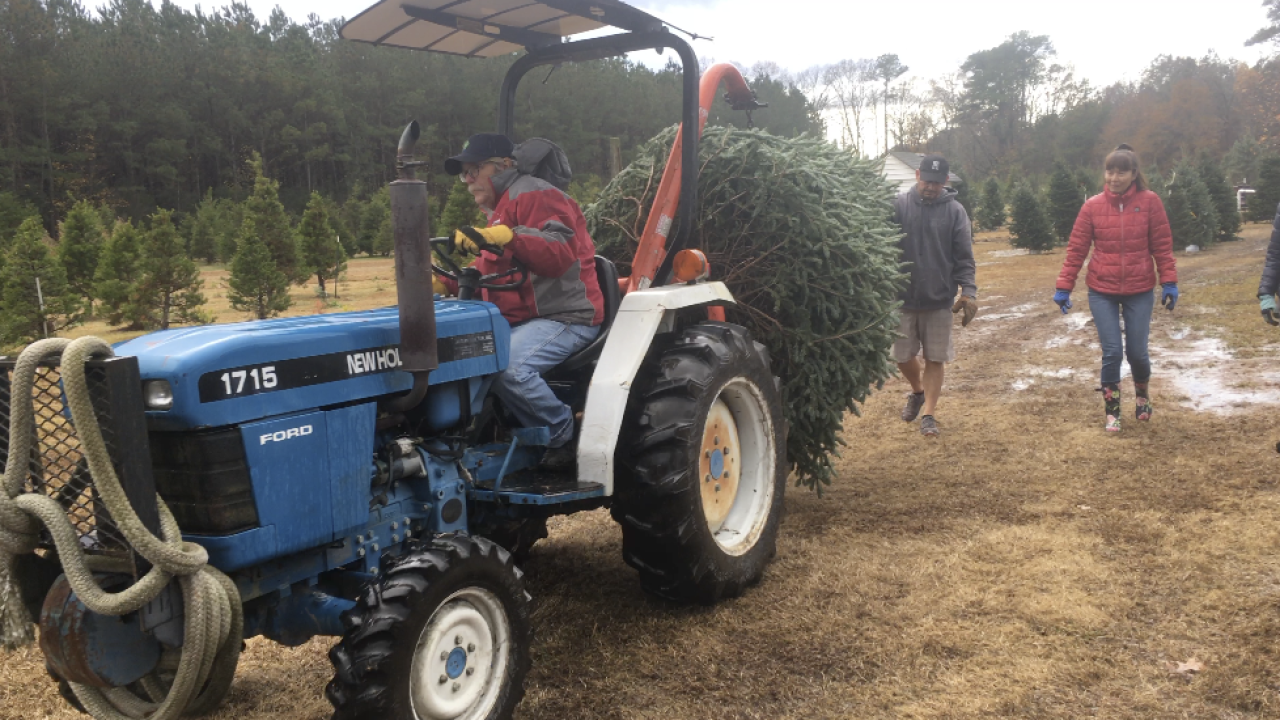 Nationwide Christmas tree shortage impacting tree sellers in HamptonRoads
