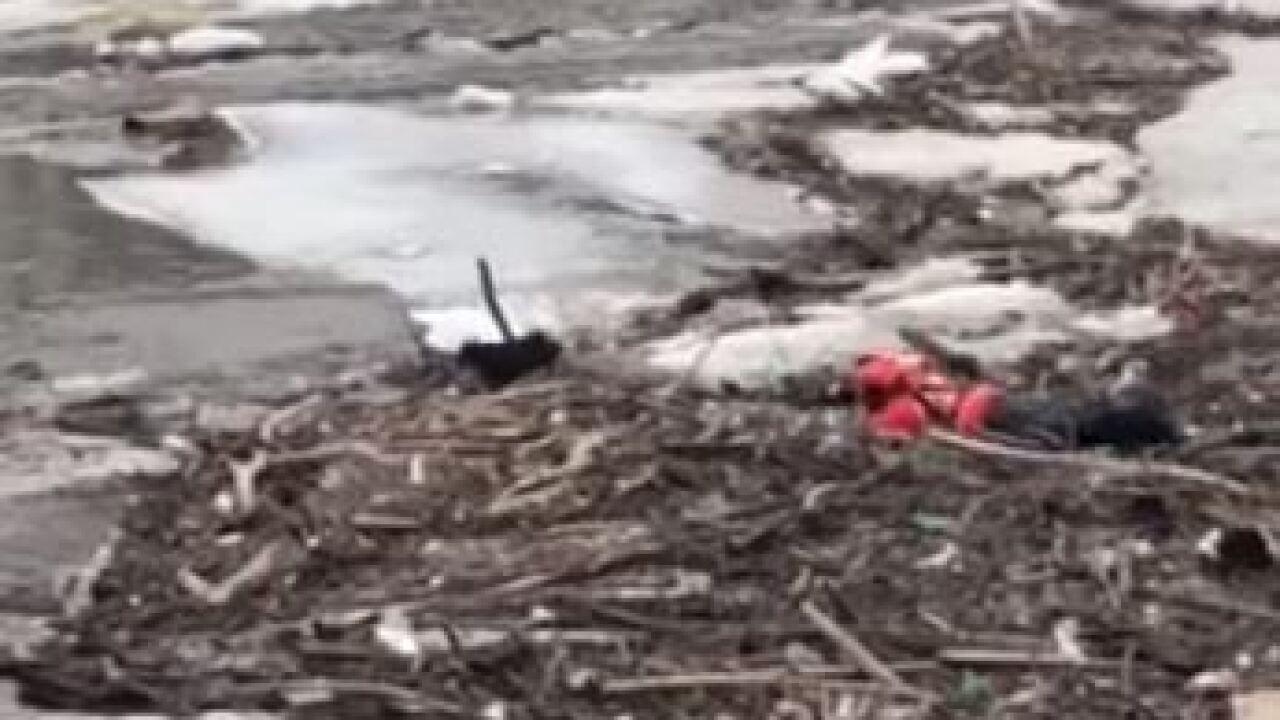 A dog and U.S. Coast Guard rescuer in Milwaukee River
