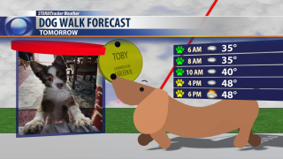 Spotty showers expected for your dog walk tomorrow