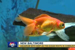 This New Baltimore aquarium has ocean-deep roots in the community