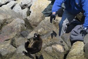 otter rescue 2.jpg