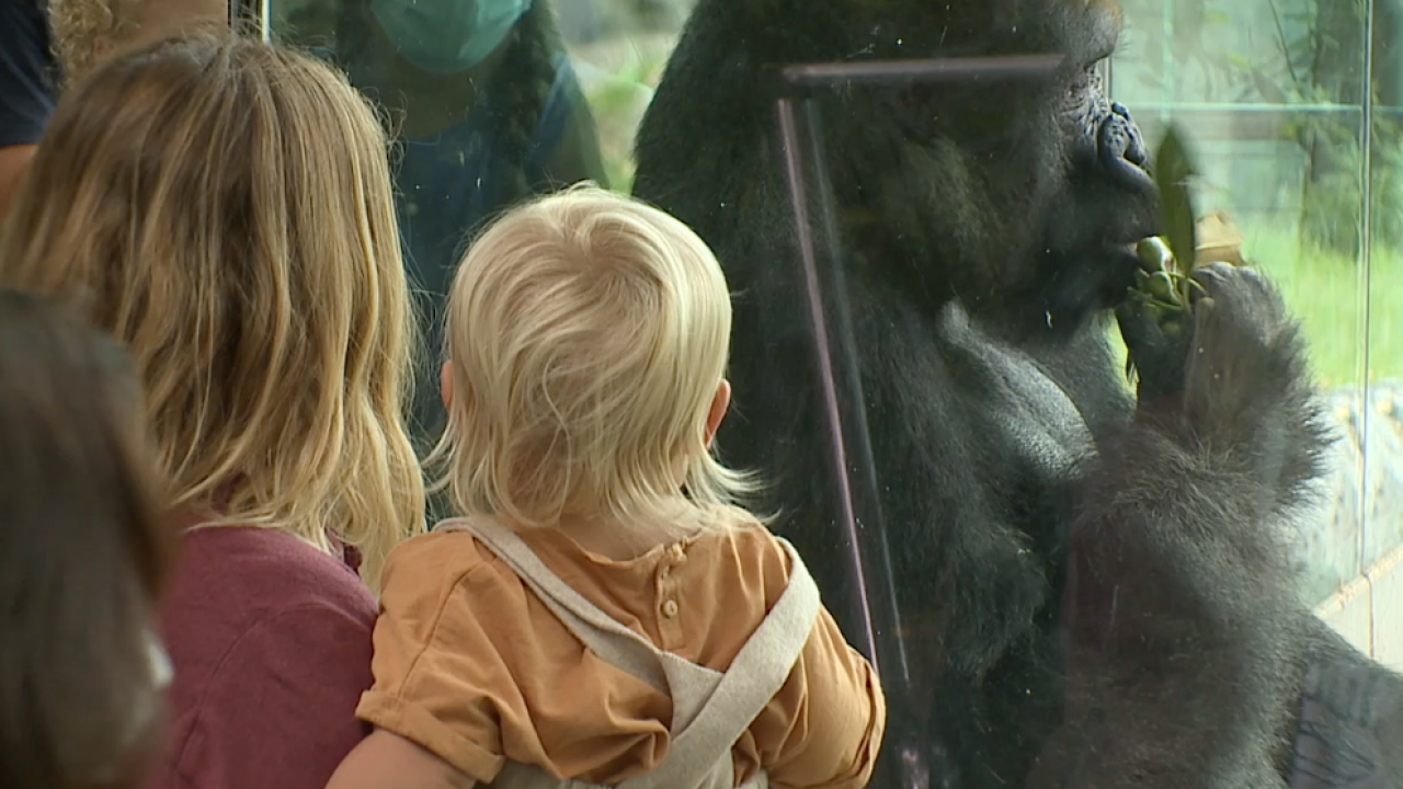 San Diego Zoo reopens.png