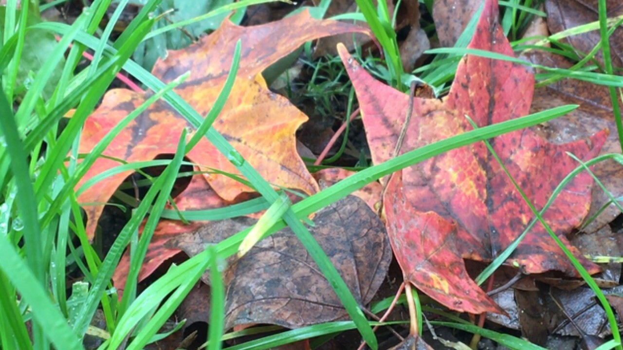 Leaf collection in Indy begins Monday