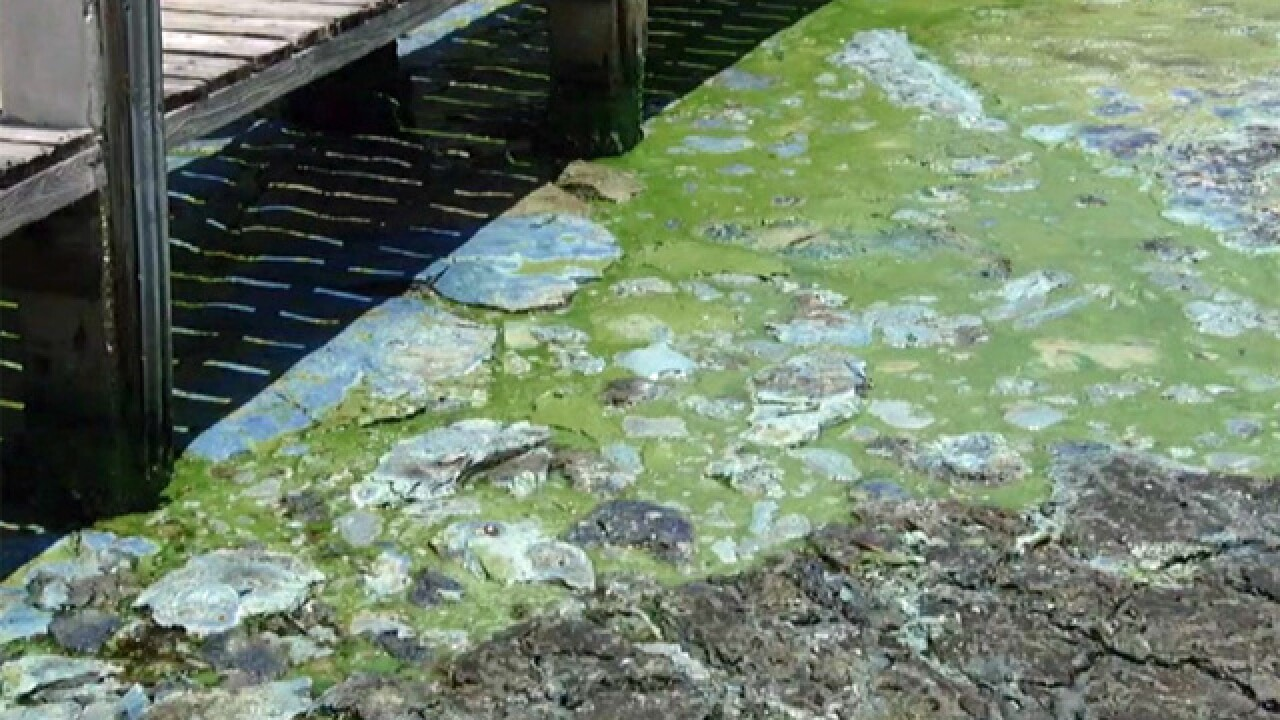 LIVE: Martin Co. briefing on blue-green algae