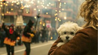 Keep your dog calm during Fourth of July fireworks