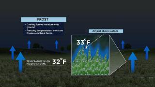 FrostProd_03212020.jpg