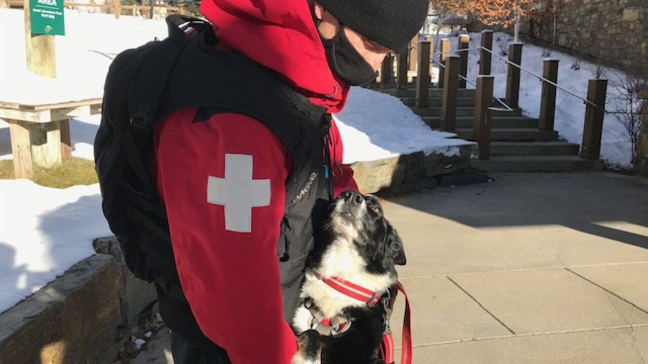 Help sought after longtime Whitefish avalanche rescue dog diagnosed with cancer