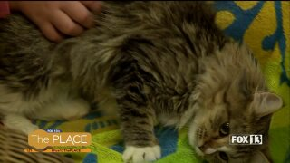 Find your soulmate at the 'Fall in Love' adoptionevent