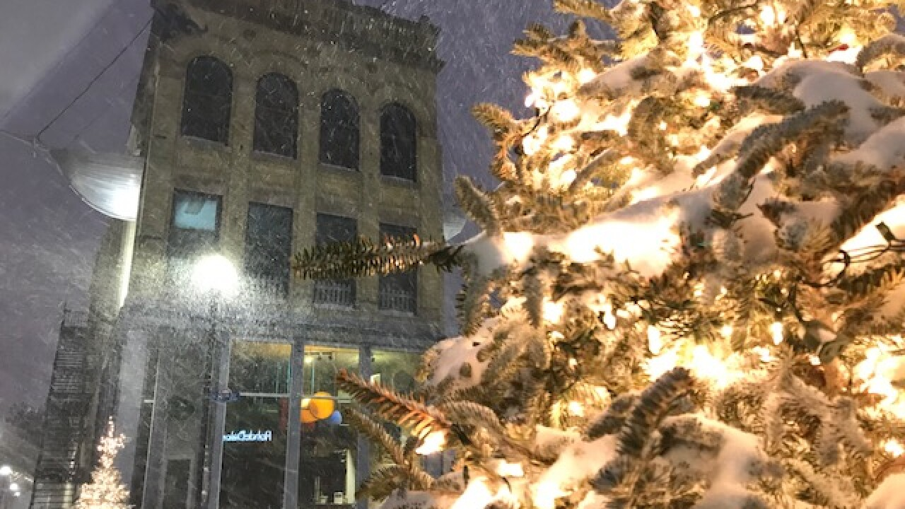 Tree in Sheboygan covered in snow Tuesday