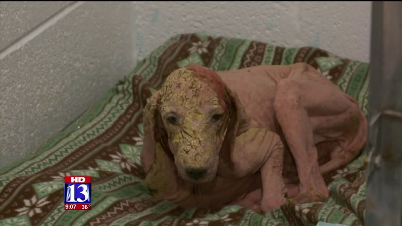 Man rescues badly malnourished dog found wandering Salt Flats alone