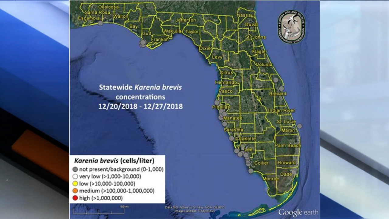 Fwc Report Red Tide Not Present On Florida Beaches