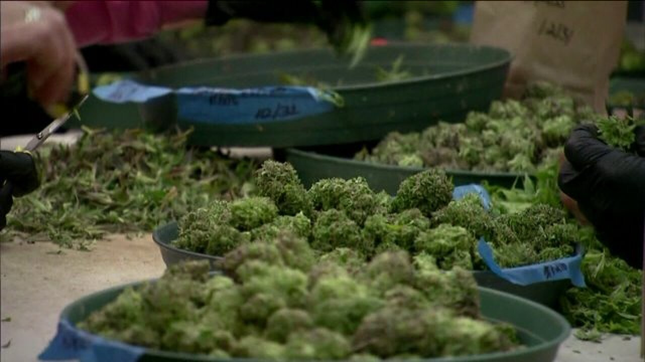Local marijuana advocates head to Richmond to lobby lawmakers