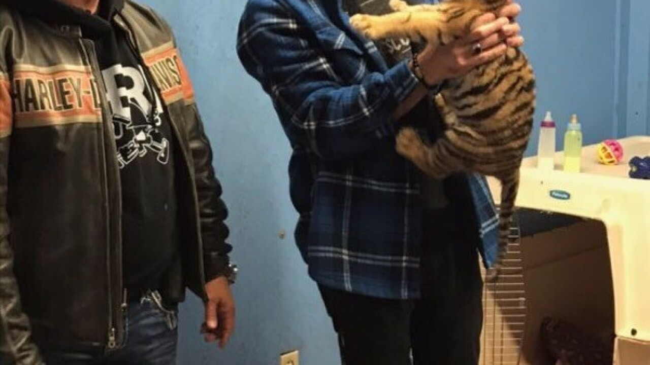 Magic Murray holds tiger cub with Jeff Lowe of Tiger King notoriety