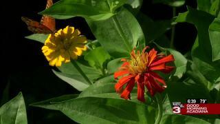 Butterfly native garden flowers