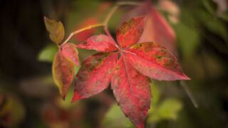 When is the best time to go 'leaf peeping' in your state? This map will tell you.
