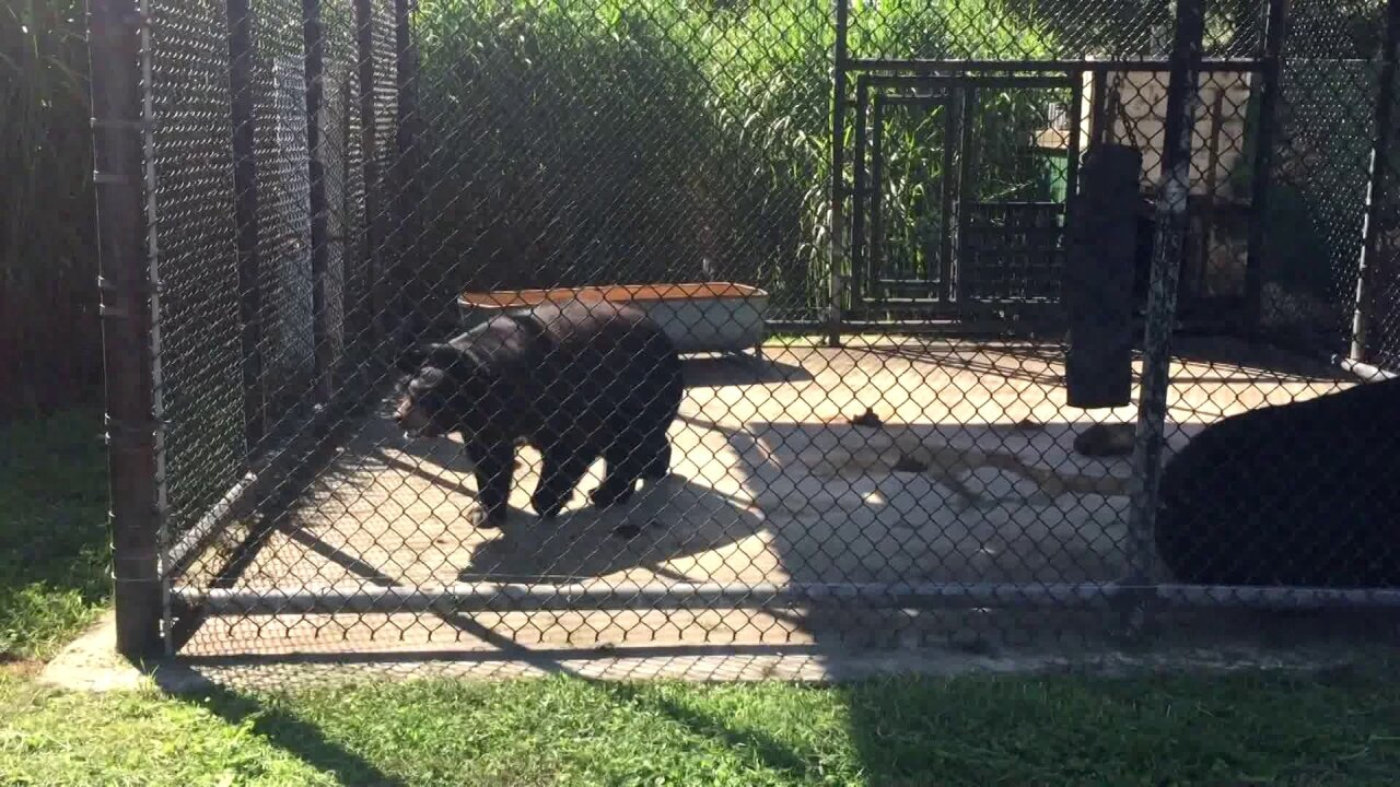 Wilson's Wild Animal Park owner faces 46 animal cruelty charges