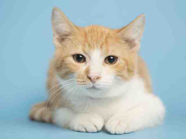 Adoptable pets from Maricopa County Animal Care and Arizona Humane Society (12/6)