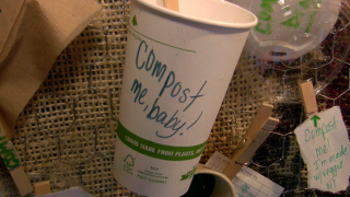 compostable coffee cup at Black Crow Coffee