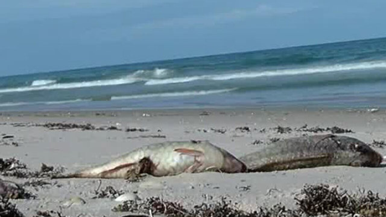 Crews to remove 'thousands of dead fish' from North Hutchinson Island beaches Wednesday
