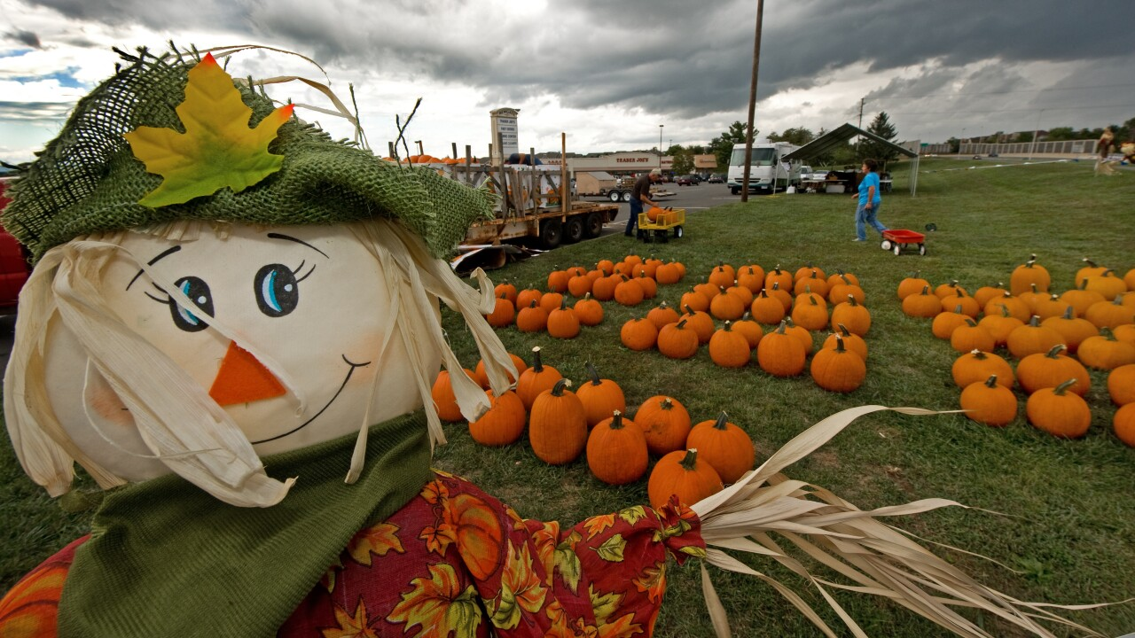 Putting pumpkins outside? Keep in mind they could attract pests, expertssay