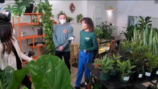 Maranta Plant Shop