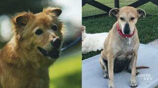 Chula and Sali are besties and would like to be adopted together from Big Dog Ranch Rescue.