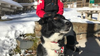 Support sought for longtime Whitefish avalanche rescue dog battling cancer