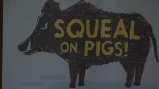 Montana Ag Network: feral hogs in Montana