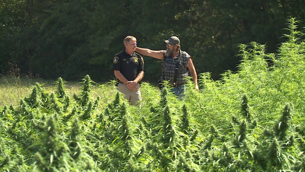 Deputies make arrests after staking out Virginia hemp fields
