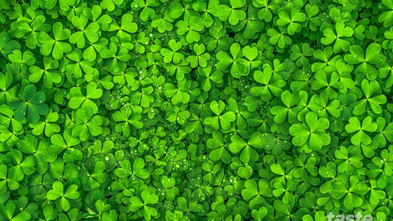 South Florida St. Patrick's Day event guide
