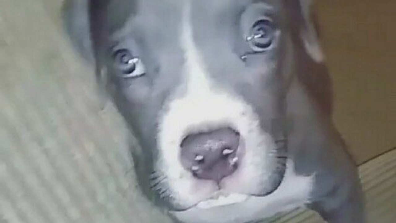 Series of failures lead to puppy's 'mistaken' euthanasia; investigators to reveal findings