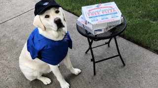Dominos Dog.png