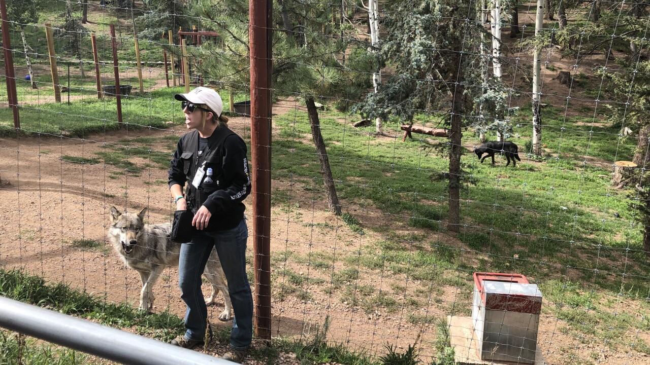 Rocky Mountain Wildlife Foundation_2.jpg