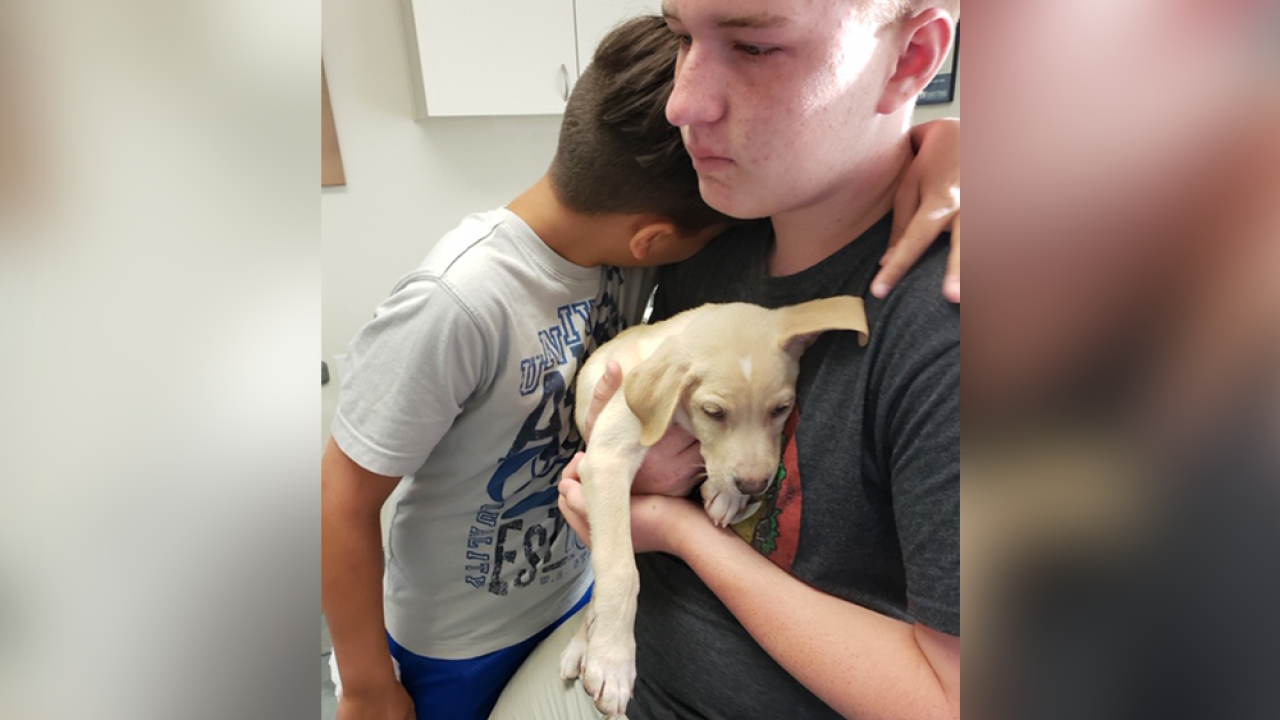 Puppy with deadly virus sold to family on Craigslist, Pasco