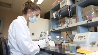 At Montana State University, researchers are looking into viruses that can potentially jump from bats to humans. The U.S. Department of Defense recently awarded the MSU research project a $4 million grant – on top of a previous $10 million one - for their work.