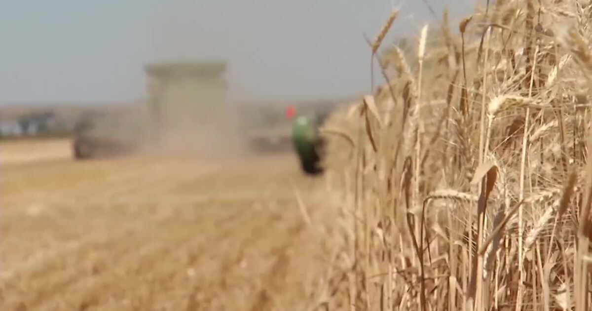 Montana Ag Network: Trump comments frustrate wheat farmers