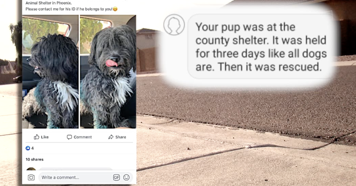 Valley family fights for pets return after county ships lost dog to CA