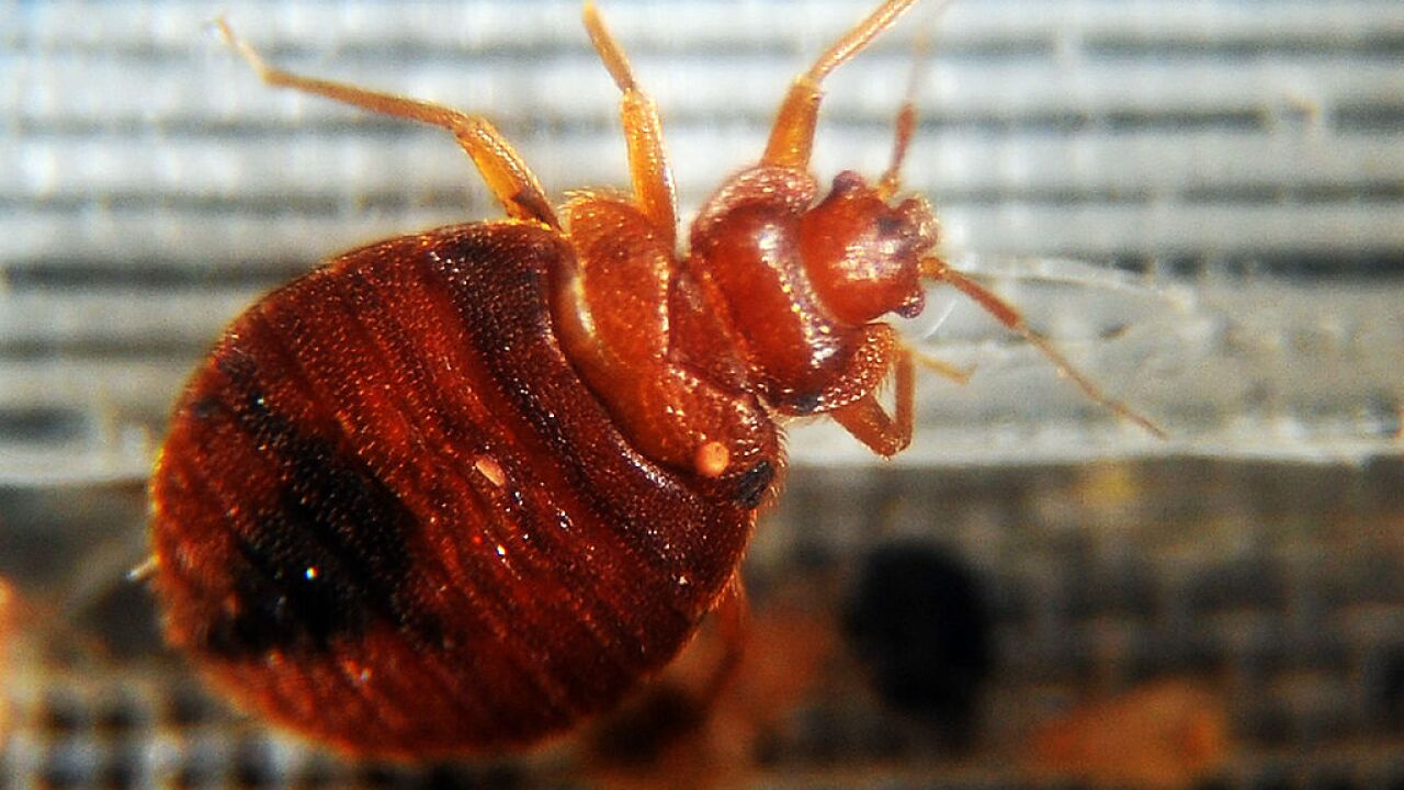 More bed bugs found in Norfolk schools