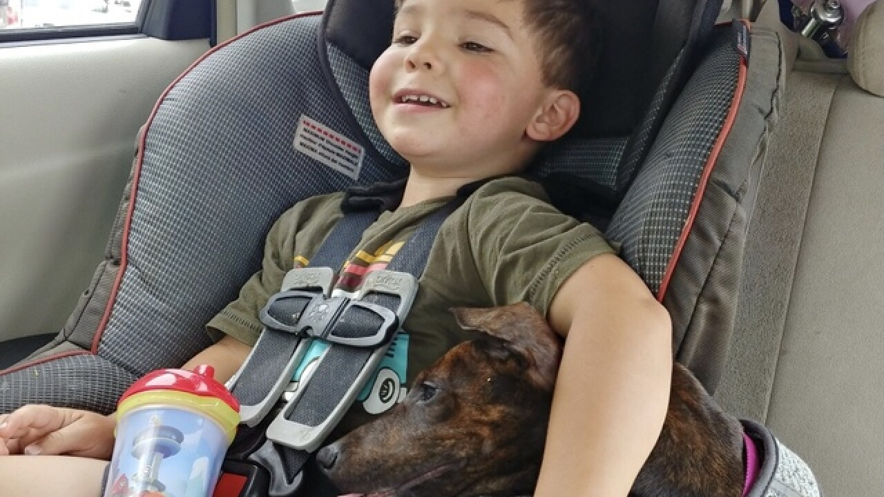 Mom pleads for return of stolen therapy dog