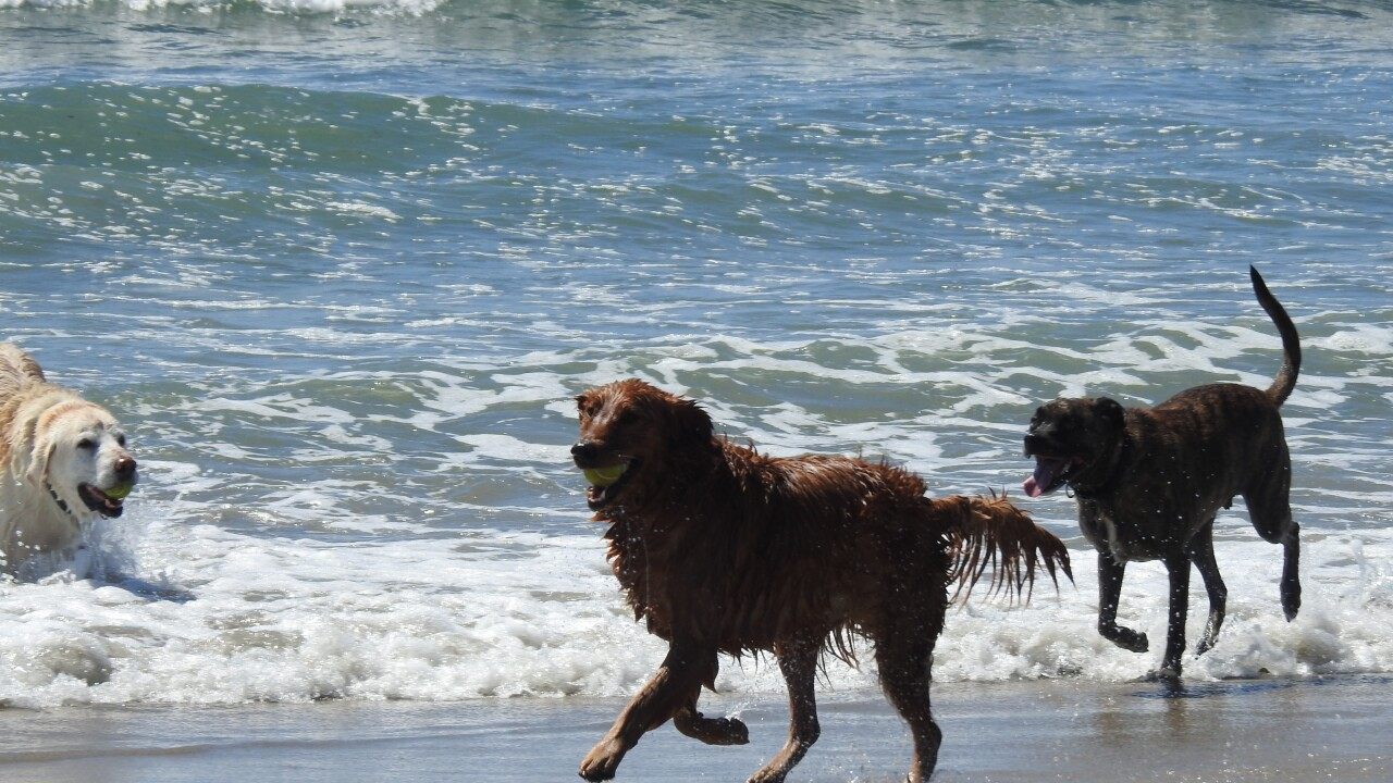 What to know before bringing your dog to the beach