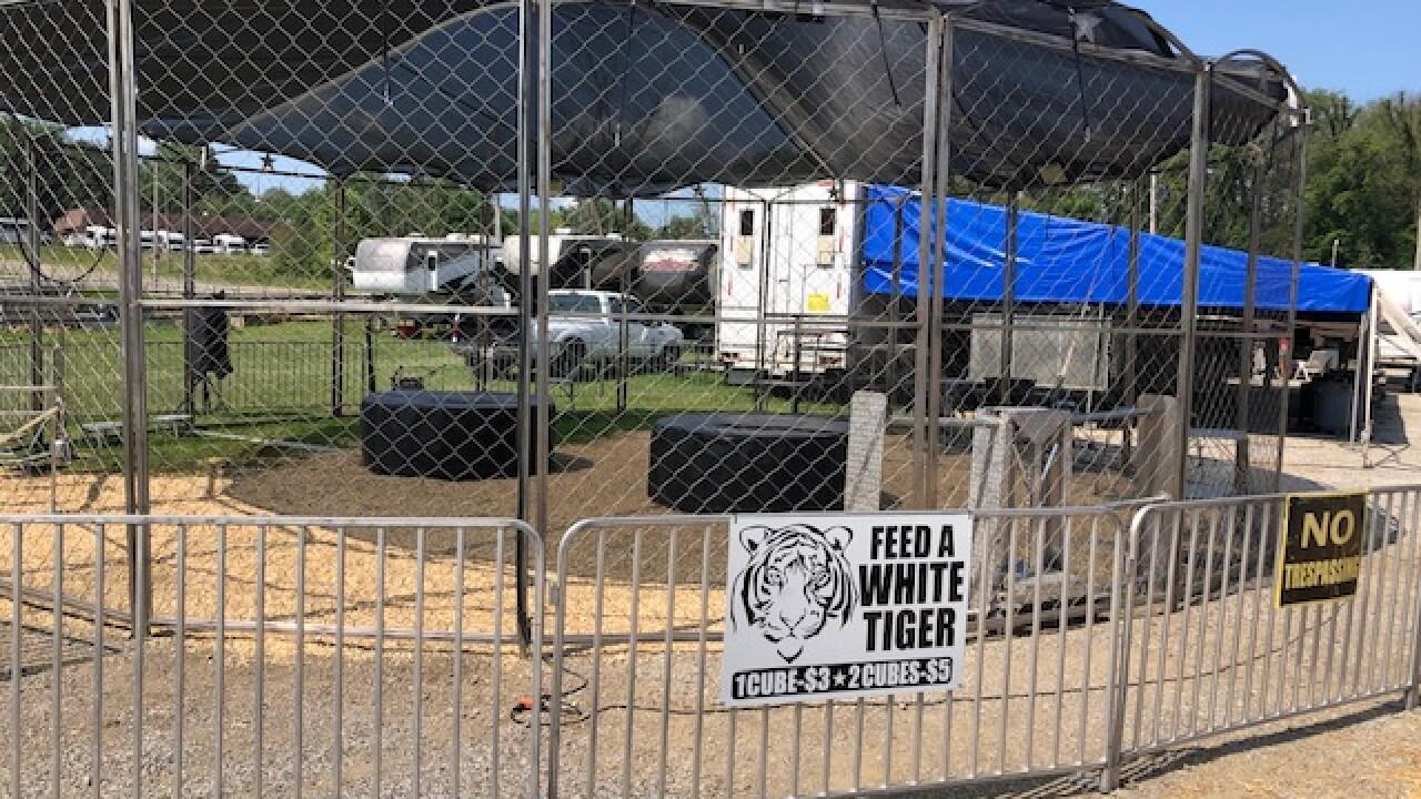 Summit County Fair tigers