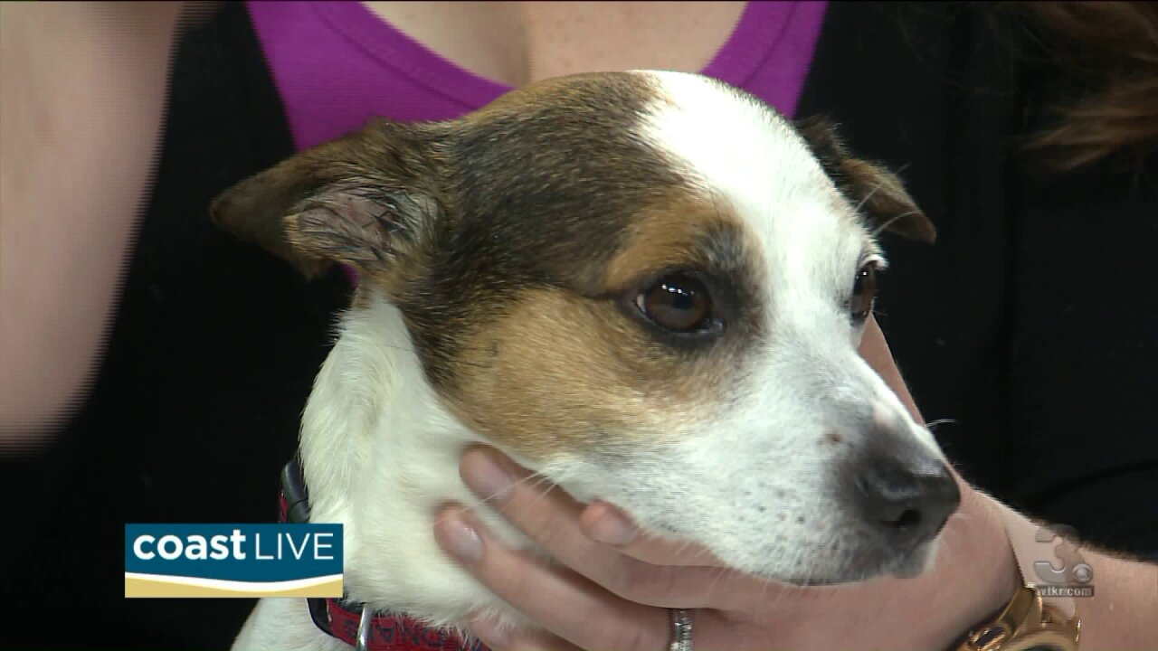 VBSPCA helps us with Tick prevention and treatment on Coast Live
