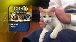 Paws for Pets – Cat's Cradle of Greater Richmond