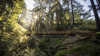 CORRECTION California Redwoods Trail Reopens