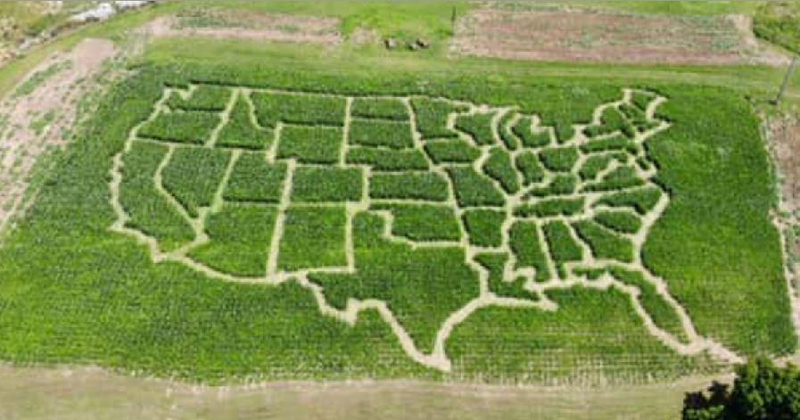 Photos: Virginia farmer turns corn field into USA map cornmaze